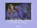 Consultez la Fiche : English Springers Spaniels of Cookies and Cream