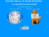 Elevage Golden Retriever Du Mazage De Mascayenne